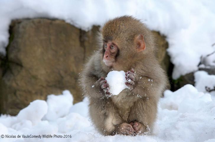 Фото №7 - Победители премии «Смешные фотографии дикой природы» 2016 года!