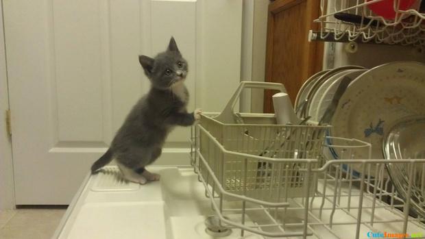 Фото №1 - 8 вещей, которые, оказывается, тоже можно мыть в посудомоечной машине