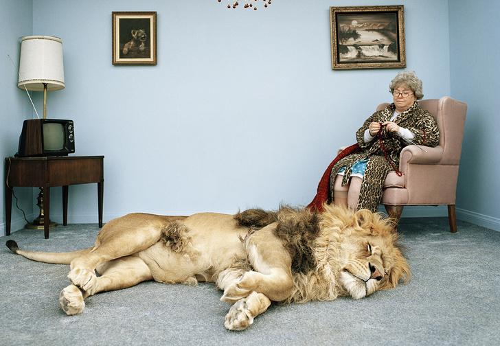 Фото №1 - Что будет, если дать валерьянки тигру или льву?