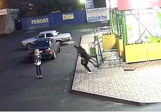 Жительница Череповца крадет картонного футболиста! Почему-то смешное ВИДЕО