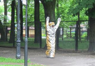 Уморительное ВИДЕО! Учения по отлову сбежавшего тигра в зоопарке!