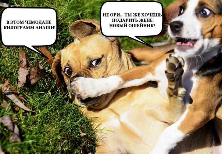 Фото №1 - Придумай смешной диалог и выиграй отличный приз!