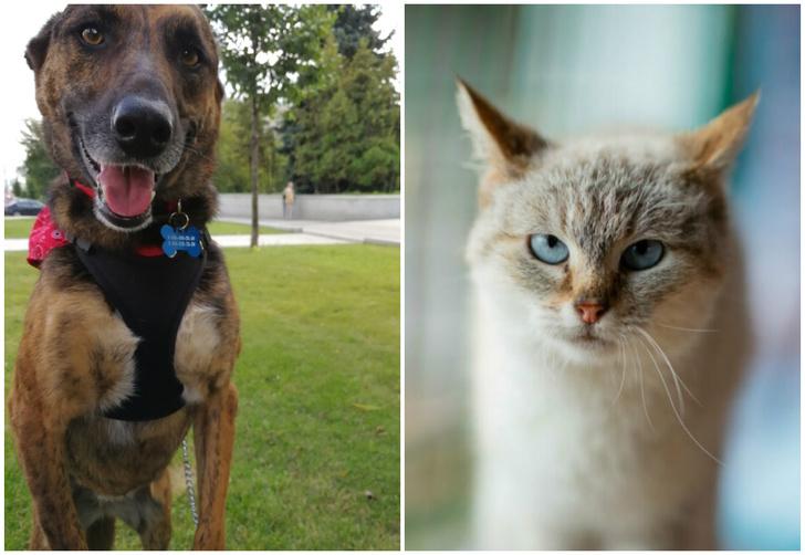 Фото №1 - Котопёс недели: возьми из приюта собаку Варю или кошку Полину