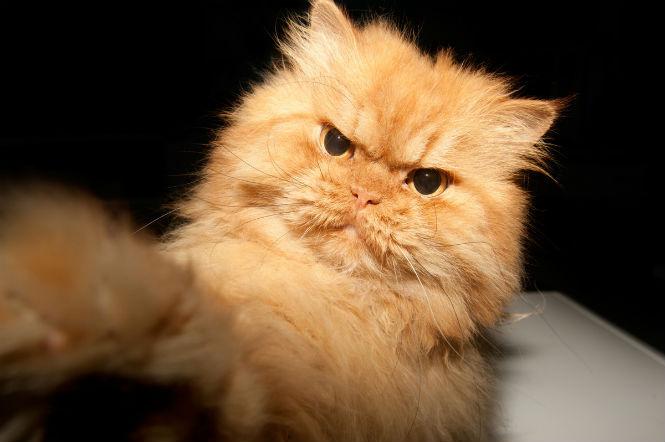 9 причин, по которым ты раздражаешь своего кота