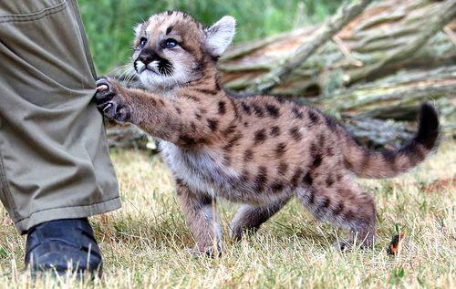 Фото №3 - 14 смертоносных животных, которые ведут себя, как будто они очаровательные котята
