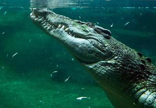 13 сногсшибательных фотозоофактов, после которых ты с подозрением будешь относиться к животным в зоопарке!