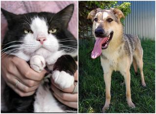 Котопёс недели: возьми из приюта кота Самсона или собаку Оливию