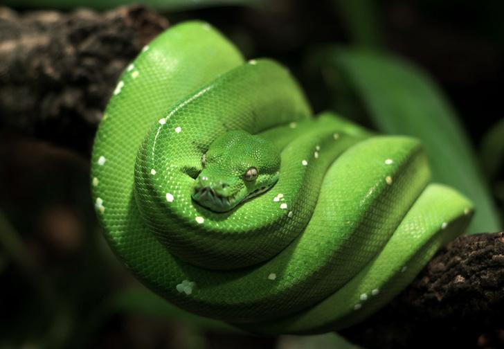 Фото №5 - Как завести дома сторожевую змею