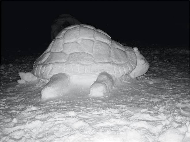 Покатай меня, снежная черепаха
