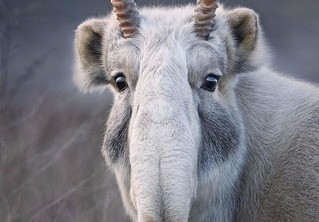 16 берущих за душу портретов вымирающих животных, которых ты рискуешь больше никогда не увидеть живьем
