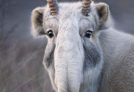 16 портретов вымирающих животных, которых ты рискуешь больше никогда не увидеть живьем