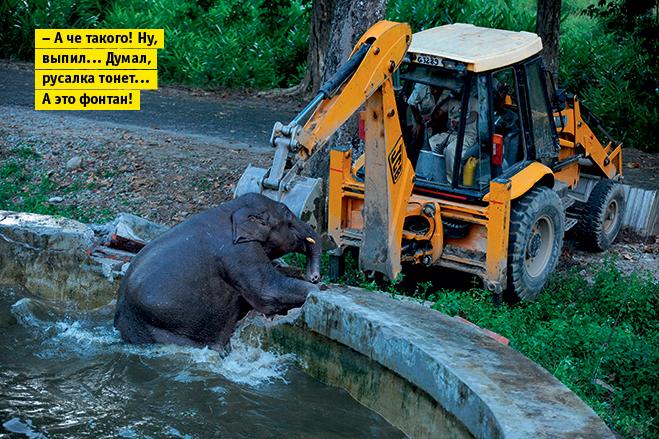 Фото №6 - Слонопотамия. 13 фотоисторий из жизни слонов