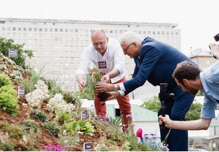 В «Аптекарском Огороде» открылся «Альпийский бельведер»