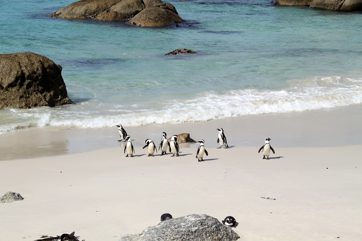 Boulders Beach, ЮАР