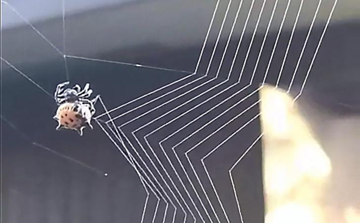 Фото №1 - В Сети появилось видео, где паук-кругопряд плетет паутину, и оно идеально!