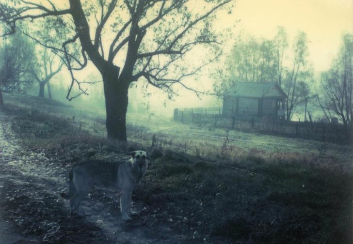 Фото №1 - 26 созерцательных фотографий-полароидов, снятых Андреем Тарковским