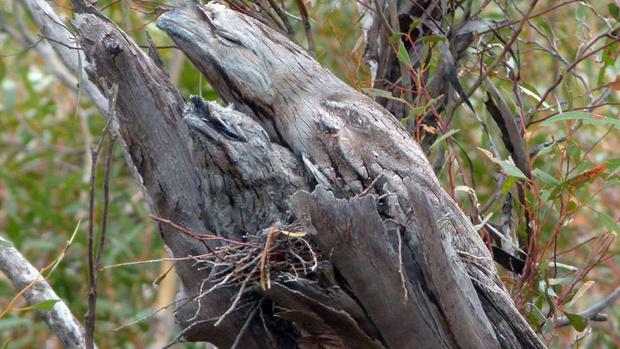 Фото №1 - Найди на картинке птицу (а то и двух)