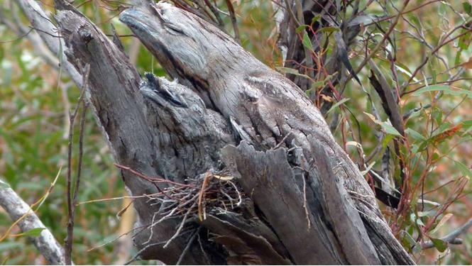 Найди на картинке птицу (а то и двух)