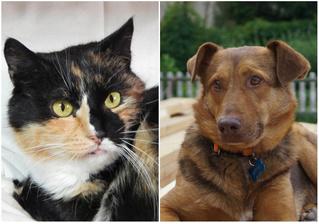 Котопёс недели: возьми из приюта трехцветную кошку Дикси или нежнейшего пса Мэттью