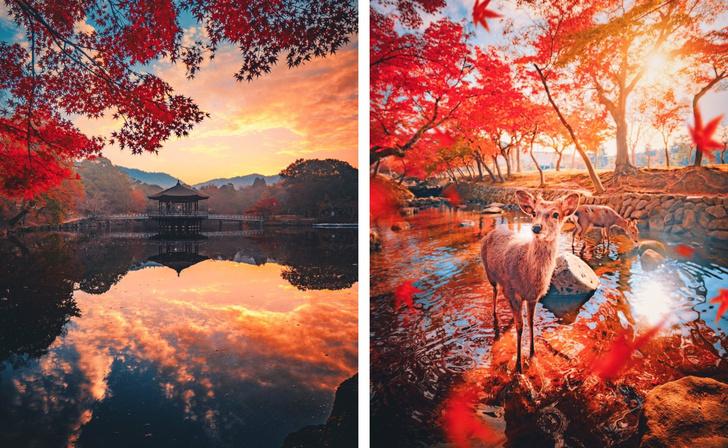 Фото №1 - Осень в японской Наре (галерея)