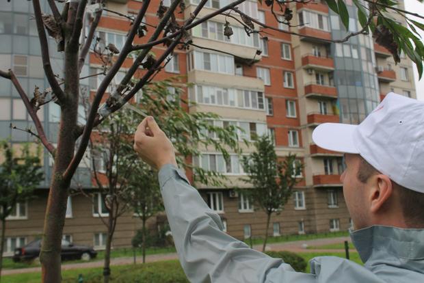 Фото №3 - Питерские коммунальщики отремонтировали засохшие деревья, приклеив к ним зеленые ветки