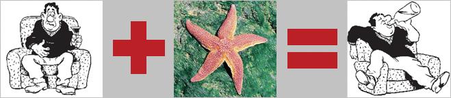 У морской звезды Lunckia columbiae — пять печеней
