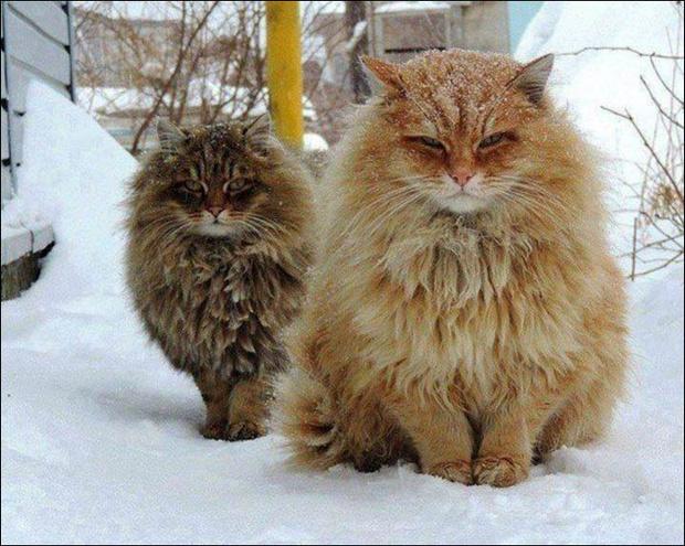 Фото №1 - Сибирская деревня с котами прославилась на весь мир!