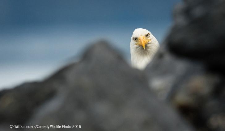 Фото №14 - Победители премии «Смешные фотографии дикой природы» 2016 года!