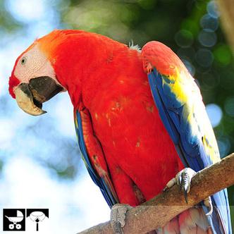 Фото №20 - Как выбрать домашнее животное в зависимости от типа твоего характера и размеров жилплощади