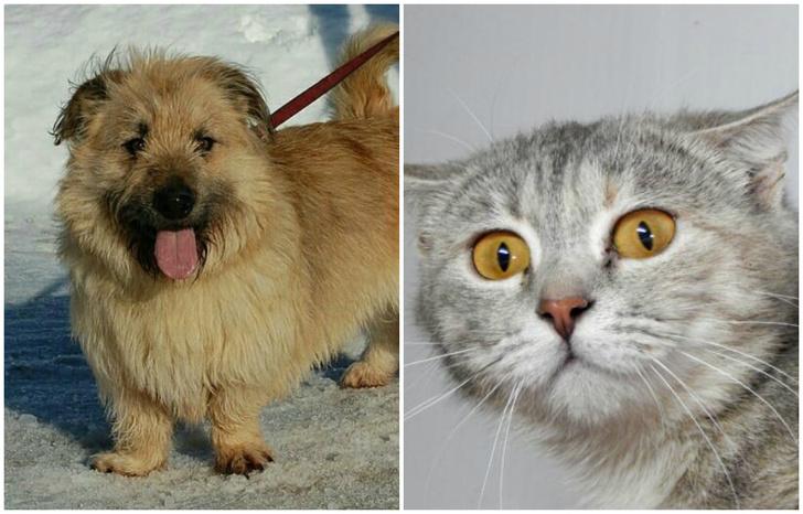 Фото №1 - Котопёс недели: возьми из приюта маленького пса Бруно или серебристую кошку Джину