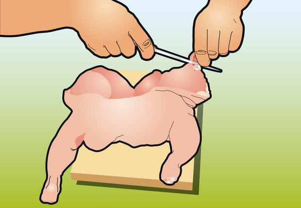 Фото №5 - Как вытащить все кости из курицы: инструкция в картинках
