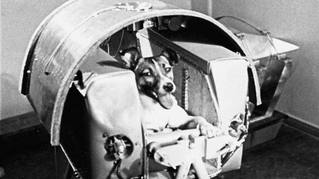 день космос полетела собака