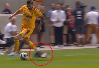 Кот выскочил на поле прямо во время атаки. Выдержке футболистов можно позавидовать (видео)
