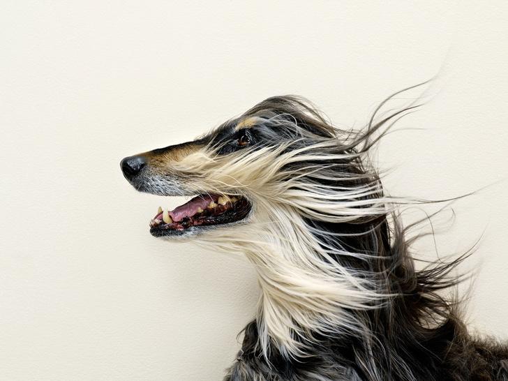 Фото №8 - Псыхология: краткая история дружбы собак и людей