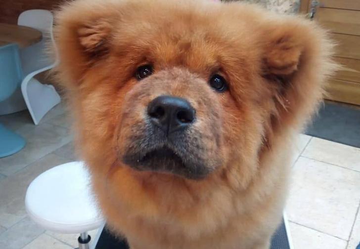 Фото №1 - В Великобритании арестовали четырехмесячного щенка, укусившего полицейского. За пса вступились тысячи человек