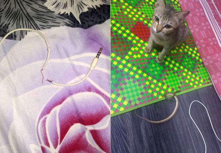 Фото №3 - Кот сгрыз наушники и принес за них хозяину необычный и пугающий подарок