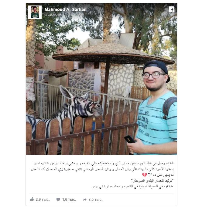 Фото №2 - В зоопарке перекрасили осла в зебру
