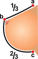 Фото №2 - Путеводитель по женской груди: 45 фактов о двух аргументах