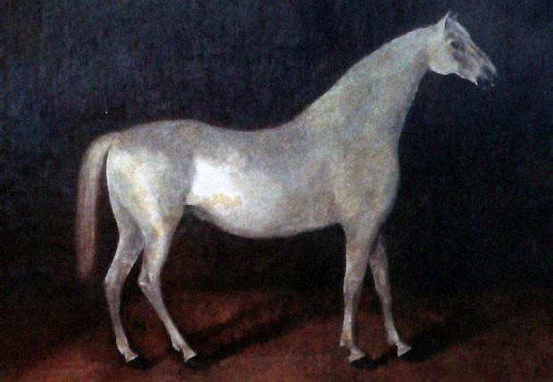 Арабский жеребец Сметанка. Картина конца XVIIIвека