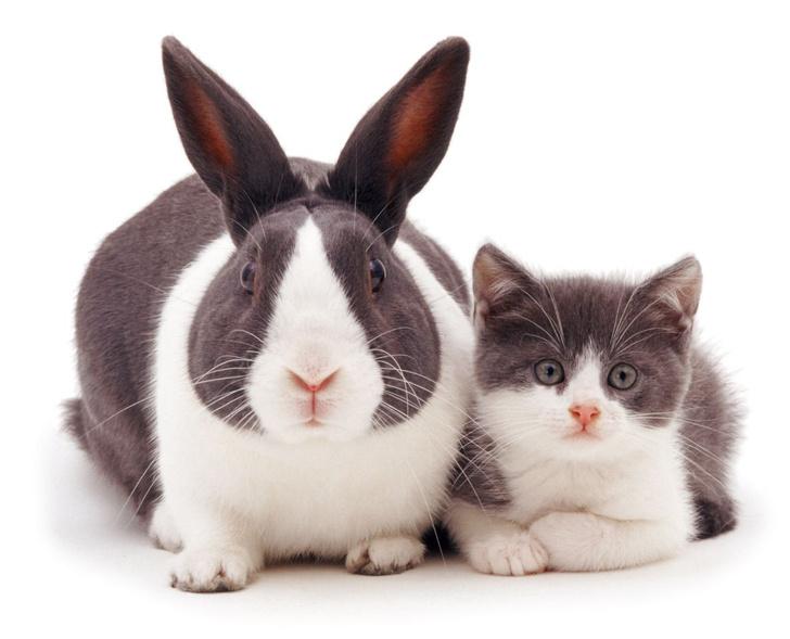 Фото №1 - 13 котят, снятых вместе со своими двойниками-кроликами