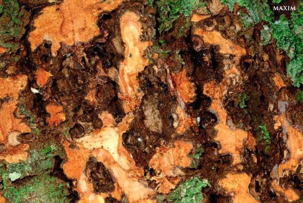 Фото №13 - Муравечество. Как мелкие козявки стали влиятельнейшими существами на планете