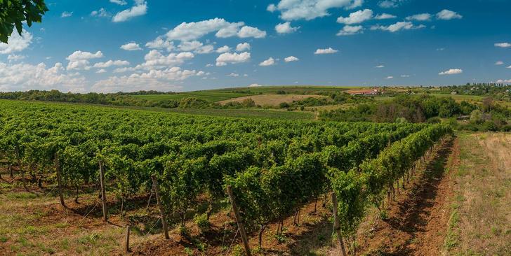 Фото №2 - Единственный в своем роде – после 10 лет подготовки проект «Долина Лефкадия» запускает продажу вилл на виноградниках