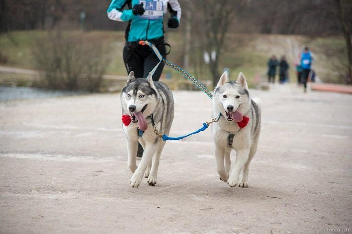 Фото №1 - Беги, помогай, погладь собаку