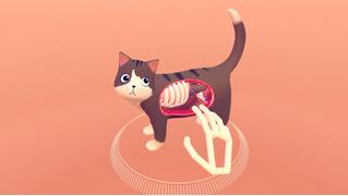 Приложение на выходные: посмотри, что внутри твоего кота (ВИДЕО)