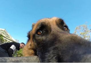 Пёс отнял у хозяина GoPro и не отдает! (ВИДЕО с GoPro)
