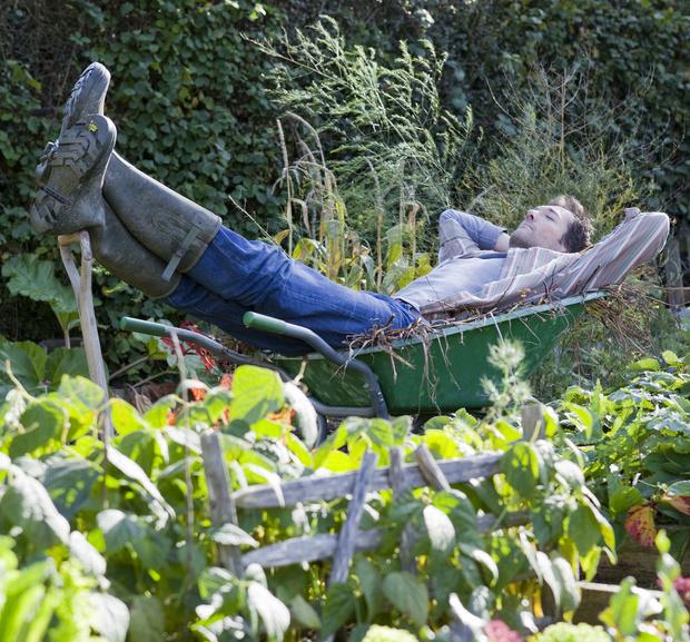 Фото №1 - 10 растений для ленивых садоводов