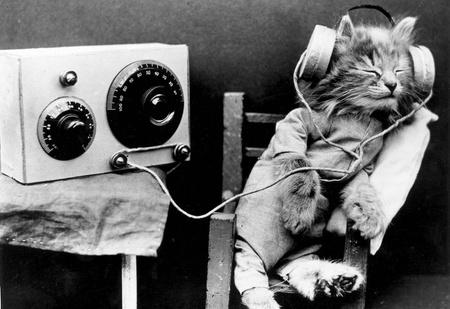 7 странных изобретений для котов