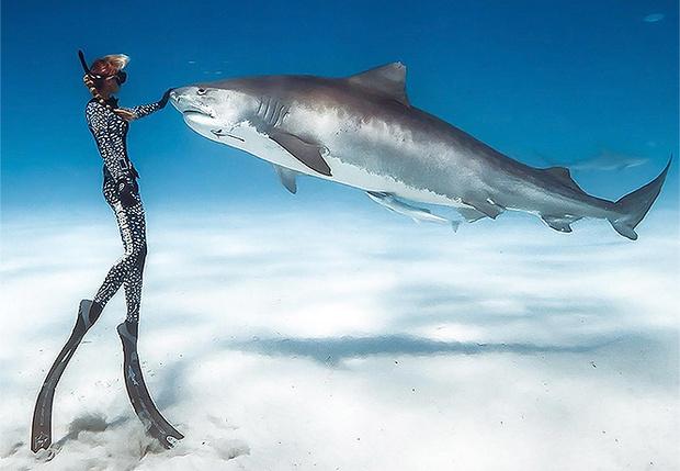 Фото №1 - Девушки и акулы: фотографии Хуана Олифанта