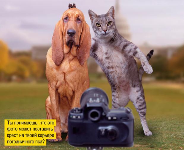 Фото №4 - Пушистая чума XXI века. Как коты захватили мир и Интернет