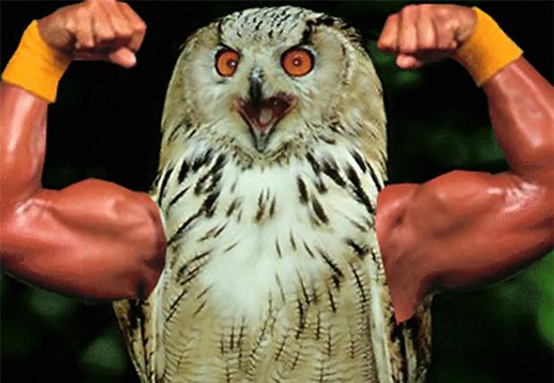 Фото №1 - Птицы с руками: 20 смешных гифок